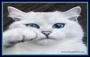Cara Memandikan Kucing Persia Atau Anggora