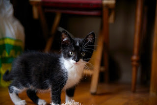 kitty karma books|wai-lin terry