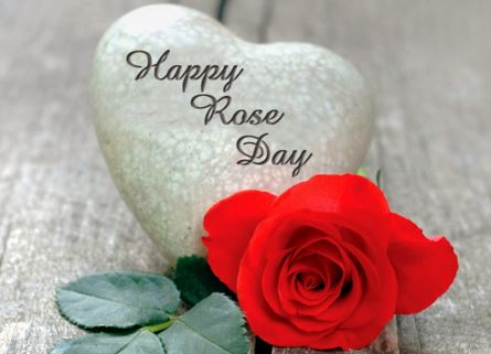 Rose Day Whatsapp Status, Dp, Facebook, Instagram, Reddit, Hike, Twitter, Images, Timeline