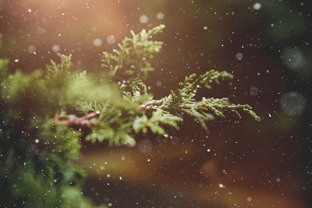 Christmas tree frond in snow