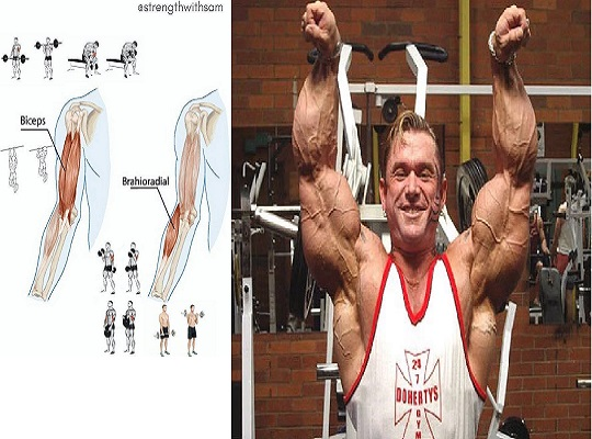 Gain Biceps And Triceps Mass With These Top 12 Exercises And Workout