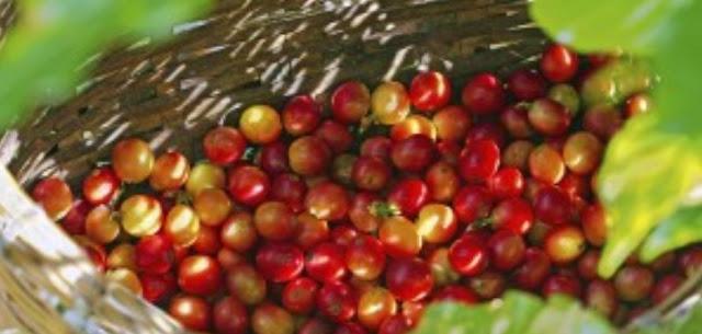 Cherry Kopi
