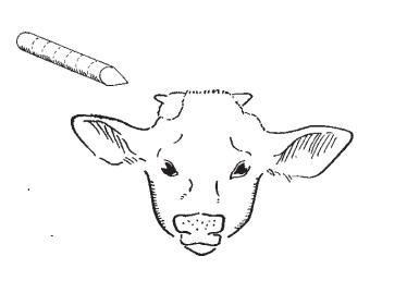 ilustrasi pelaksaan dehorning