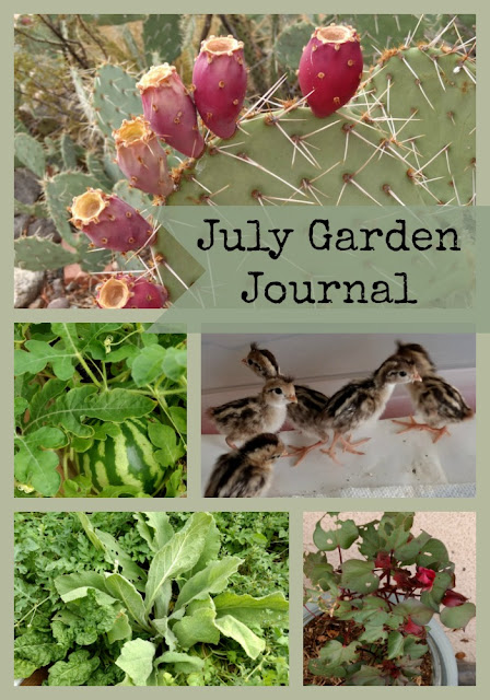 July Garden Journal