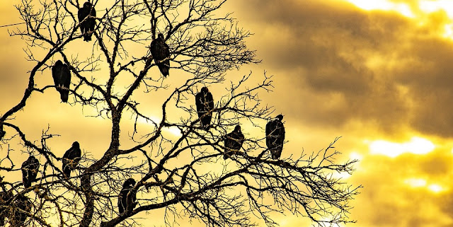 Image: Buzzards at Sunrise on a Dead Tree, by GeorgeB2 on Pixabay