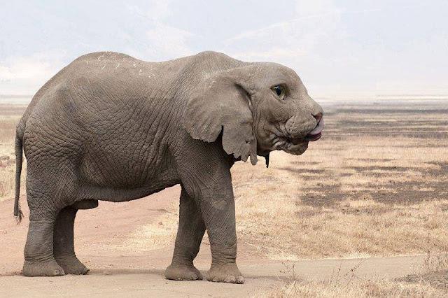 15 Gambar Manipulasi Haiwan Kepala Lain Badan Lain Yang ...