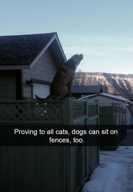 Cute Dog Memes Viral Online 5