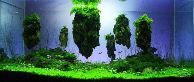Bể thủy sinh phong cách Avatar - sự sáng tạo của thủy sinh