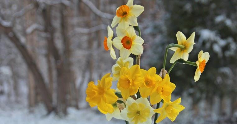 Springtime in Seagrove, NC
