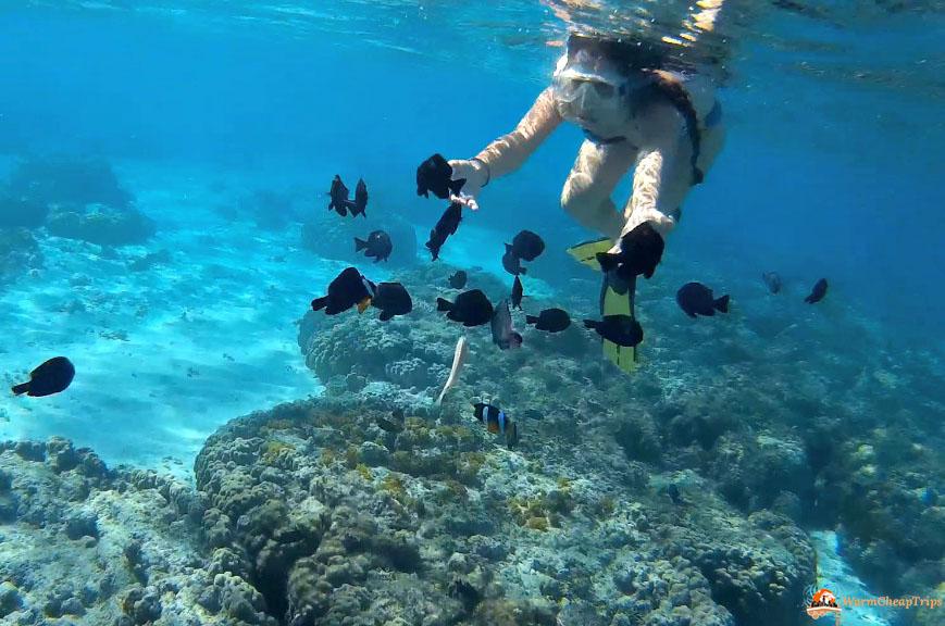 100cosedafareprimadimorire nuotare con le tartarughe a for I gatti mangiano le tartarughe