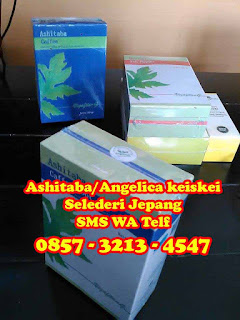 Obat kanker herbal ashitaba (Angelica Keiskei) atau obat kanker herbal selederi/seledri jepang