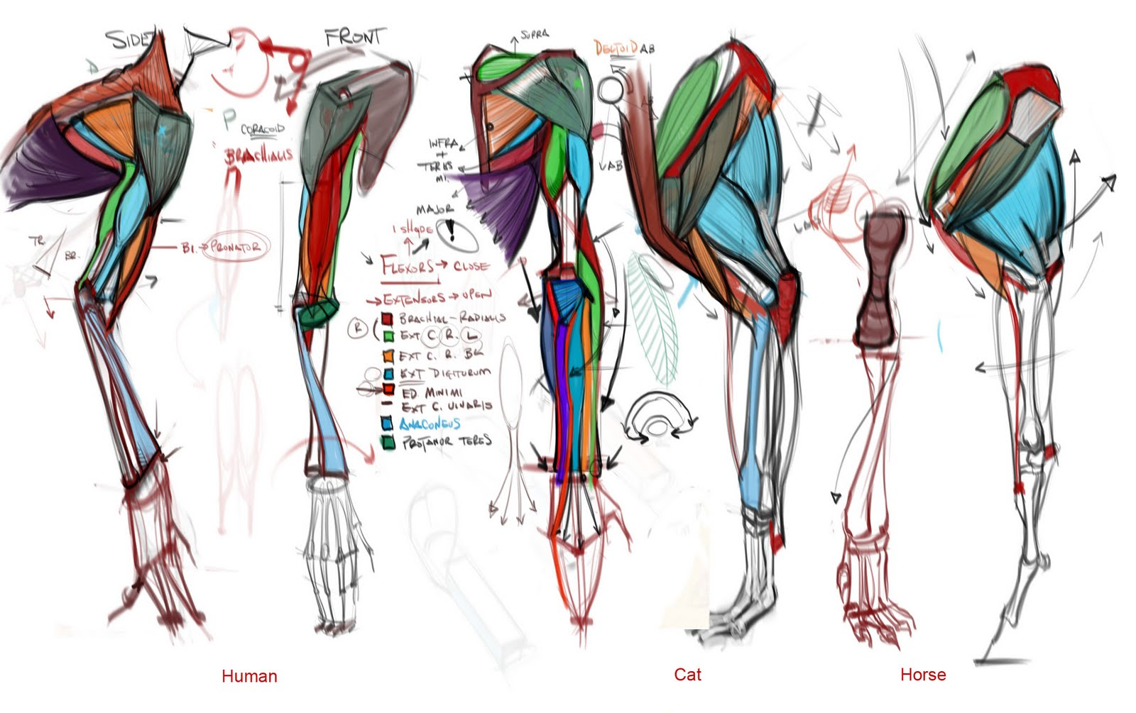 Reference Fiesta! : Comparative Anatomy