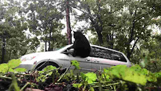 Bear breaks through van window in Asheville
