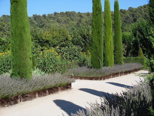 ogród Prowansji, obwódki z lawendy