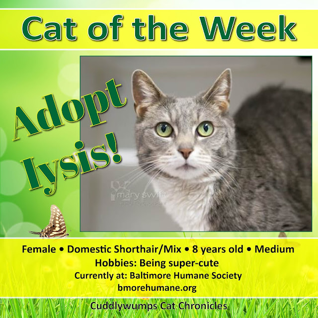 #adoptablecat #baltimorehumanesociety