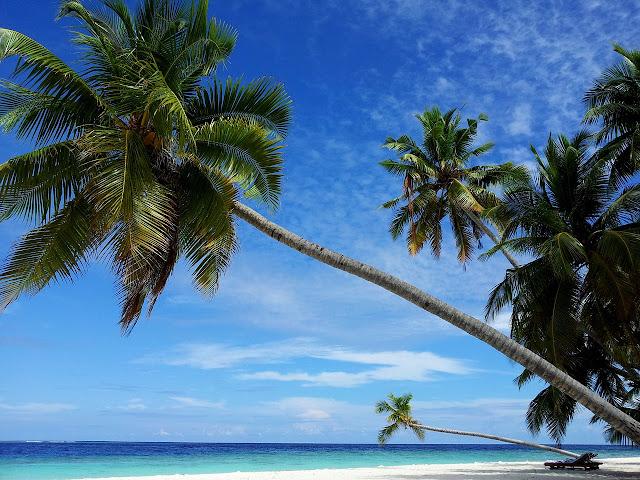 Palm Trees on Maldives Island