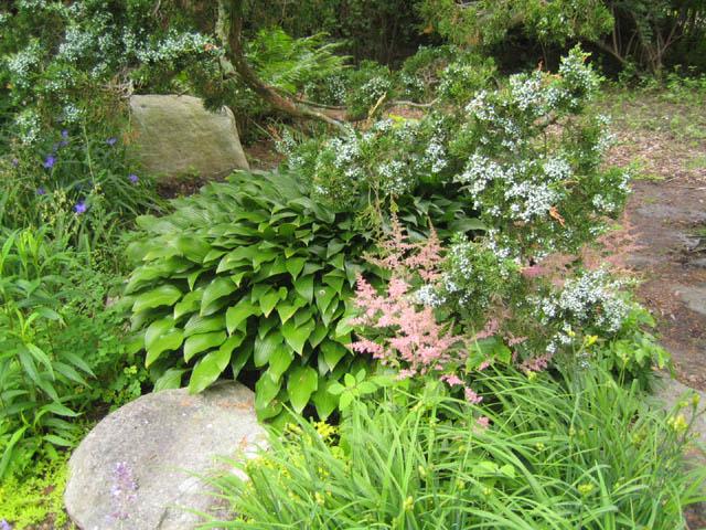 100 Natural Hardwood Mulch Shade Gardens