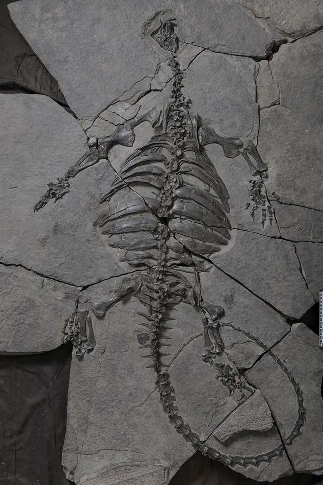 LaporanPenelitian.com A Triassic stem turtle with an edentulous beak