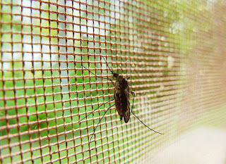 Malaria Pengertian dan Gejala Klinis