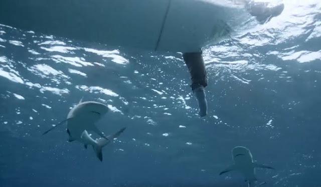 Pulseira repelente de tubarões: Ataques nunca mais