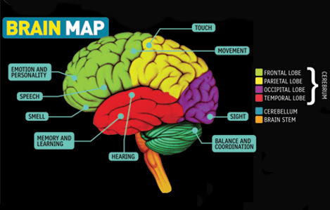 Image result for Brain Mapping