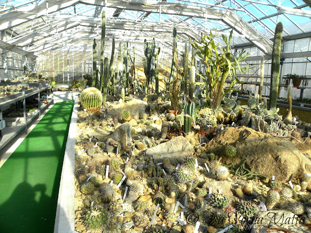 la serra con 5000 piante a Rogaska Slatina
