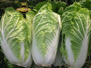 Sayuran Yang Mengandung banyak kalsium