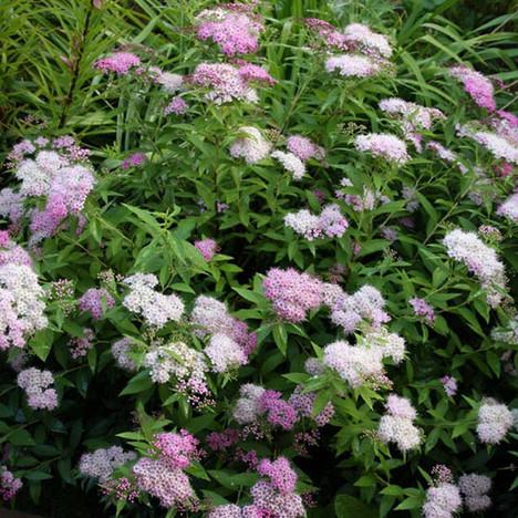 Promenade Au Jardin De Lili Dans Le Poitou Spiree Shirobana