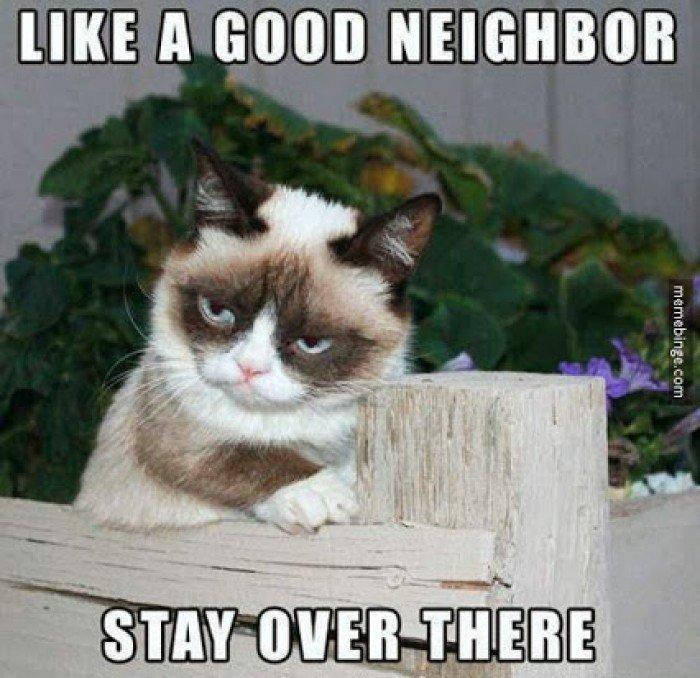 Top 50 Funniest Cat Memes 2018 Topibestlist