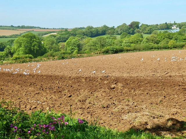 Ploughed field, Cornwall