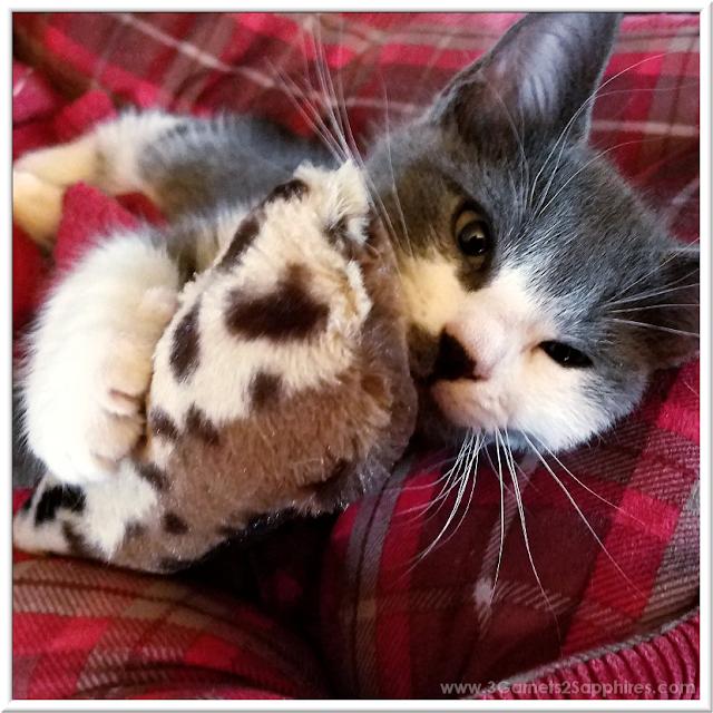 Plush FuzzyNipper Catnip Toys | 3 Garnets & 2 Sapphires