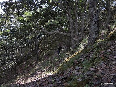 Ascendiendo el Cerro Grande de Ameca