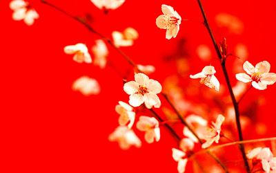 ramas-con-florecillas-de-cpetalos-blancos-y-pintas-granate