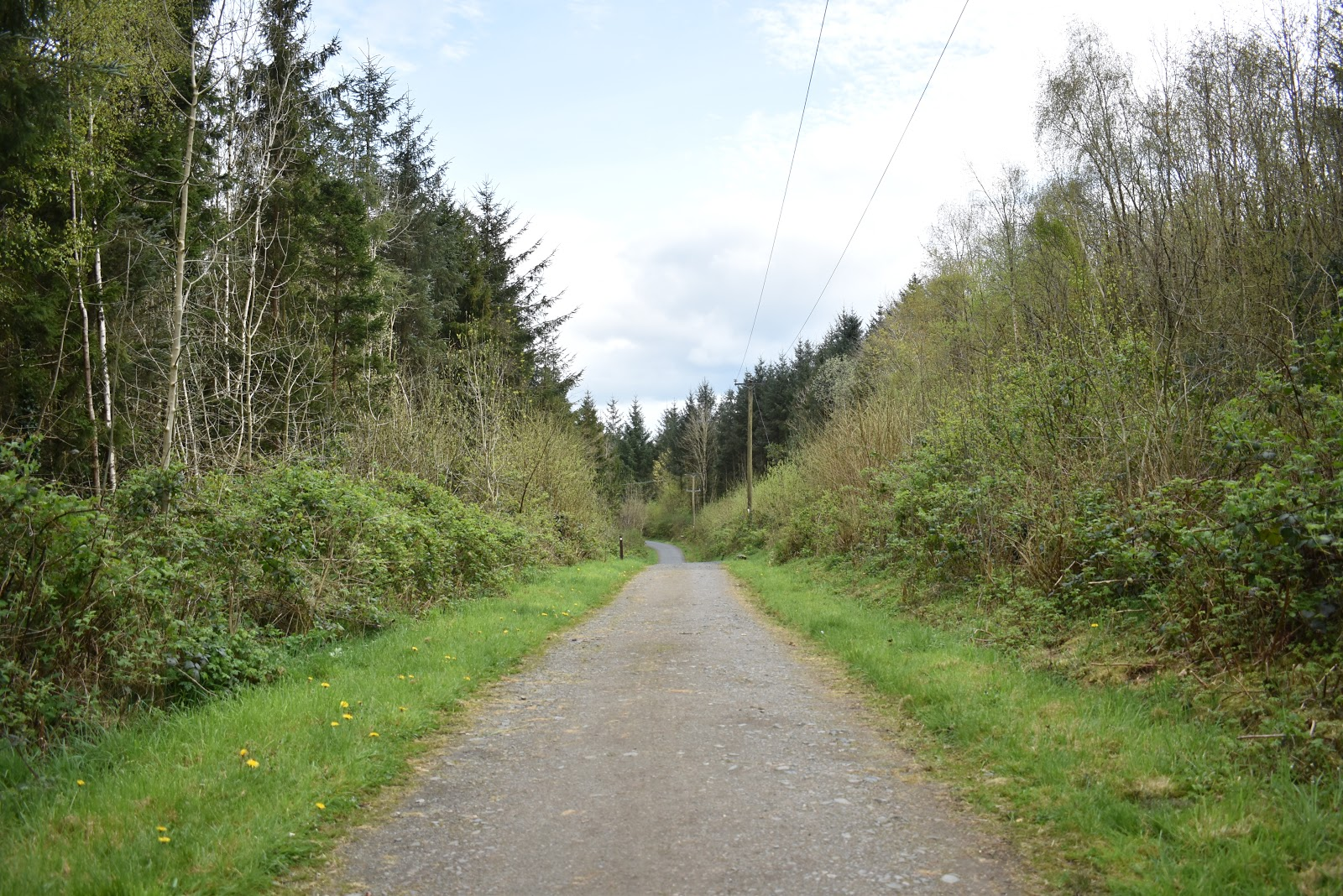 Killykeen Forest Park