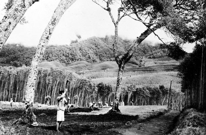Perkebunan Kina Bandung
