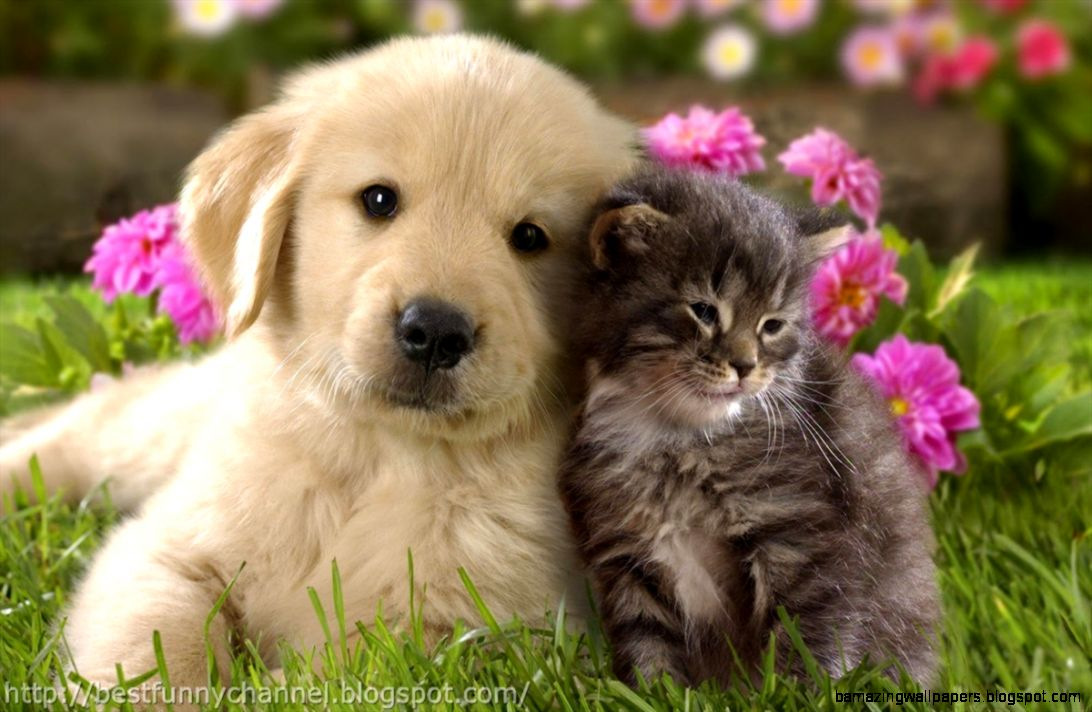 Cute Puppies And Kittens Wallpaper: Cute Puppy Kiss Gif