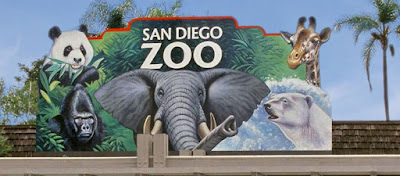 Best Tour at San Diego Zoo