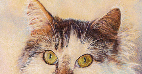 Colored Pencil Cat Drawing, Ampersand Aqua Board and Colored Pencil Resource