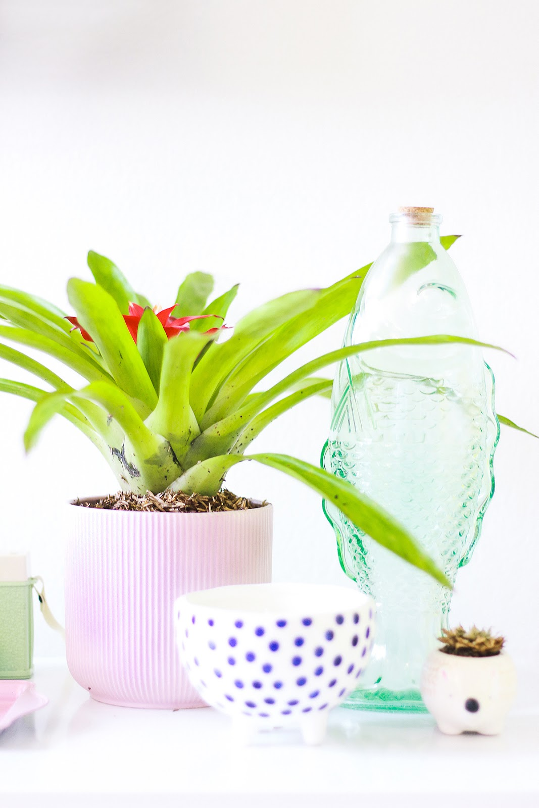 plantas tropicais garrafas coloridas bromelia decoração de casa