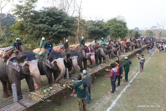 13th Elephant Festival held in Nepal.