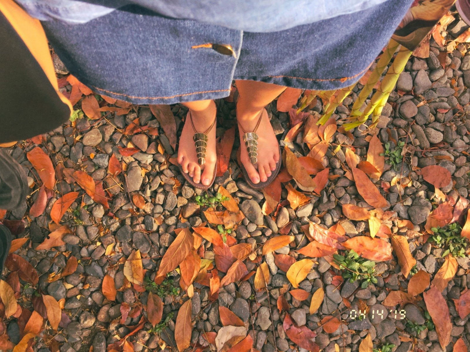 Fall by Jozelle Francisco