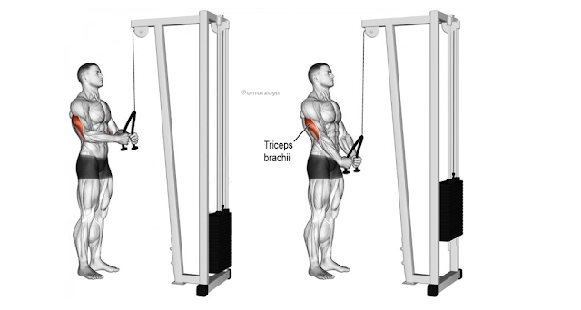 triceps rope push workout