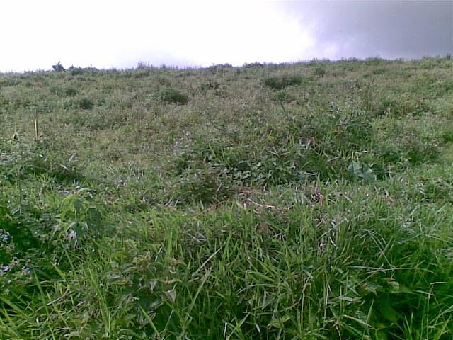 Foto(5387) Di Jual Tanah Murah 96 Ha Lokasi Kawasan Puncak Jual tanah di cipanas jual tanah di puncak