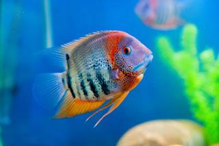 Fish Online