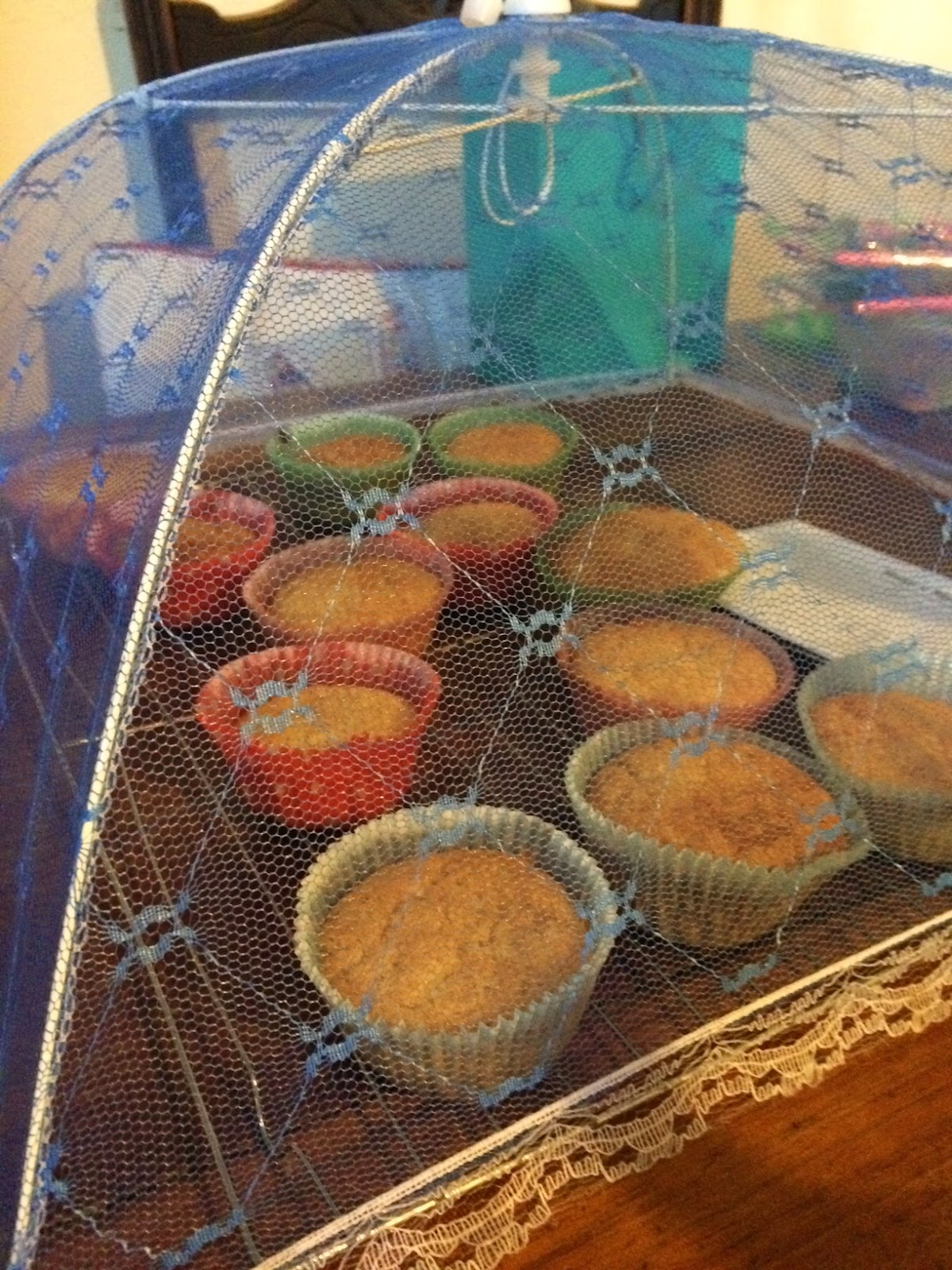 home made fairy cakes, cupcakes under pop up fly screen