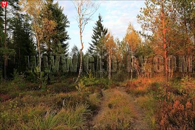 Налибокская пуща. Лесные дороги, ведущие в никуда