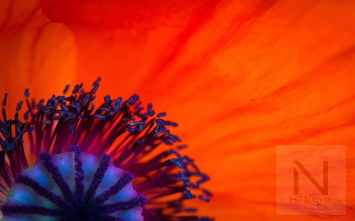 Download-Field-of-Poppies-Tema-Windows-10