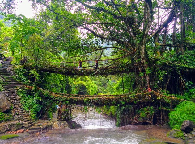 The iconic double decker living root bridges of Nongriat, Meghalaya