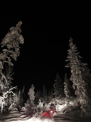 空は真っ暗なのに、木はふかふかの雪に包まれて、真っ白。