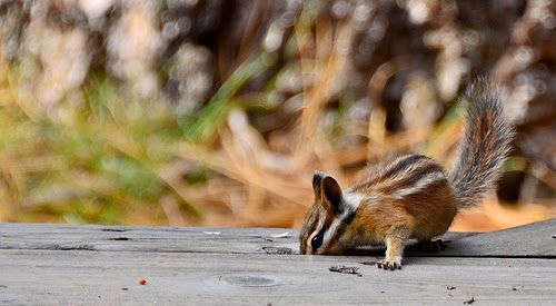 How the Chipmunk got its stripes African Folktale